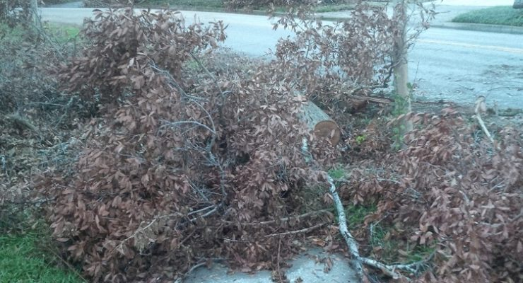 Mayor Jacobs Responds to 'Frustrated & Disappointed' Residents About Storm Debris Pickup